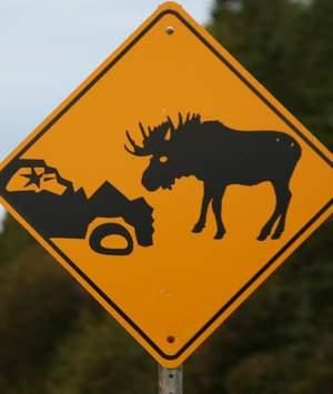 Moose warning sign 300
